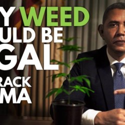 obama weed